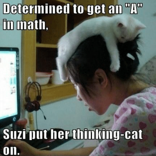 """Thinking Cat: Determined to get an """"A""""  in math,  Suzi put her thinking-cat  on."""