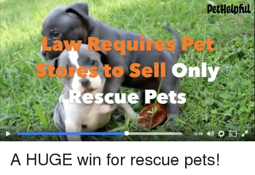 Memes, Pets, and 🤖: DetHelpful  Law Requires Pet  Stores to Selln  It  escue Pets A HUGE win for rescue pets!