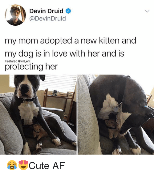 Af, Love, and Memes: Devin Druid  @DevinDruid  my mom adopted a new kitten and  my dog is in love with her and is  protecting her  Featured @will ent 😂😍Cute AF