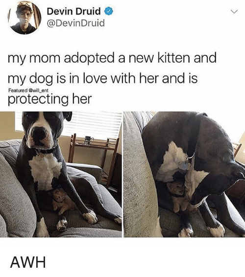 Love, Memes, and Mom: Devin Druid  @DevinDruid  my mom adopted a new kitten and  my dog is in love with her and is  protecting her  Featured will ent AWH