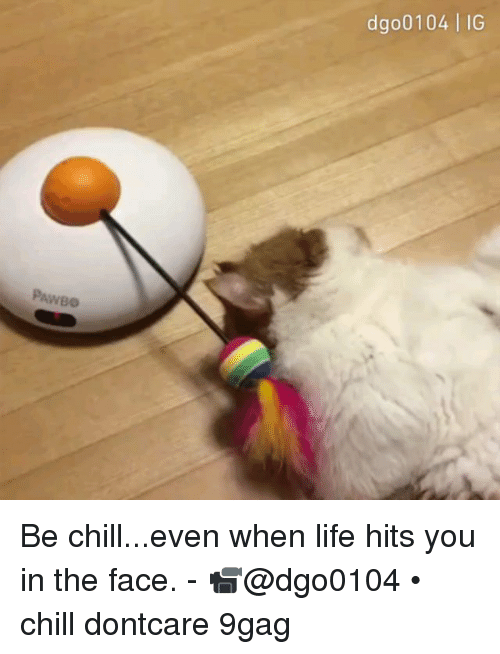9gag, Chill, and Life: dgo0104 | IG  PAWBO Be chill...even when life hits you in the face. - 📹@dgo0104 • chill dontcare 9gag