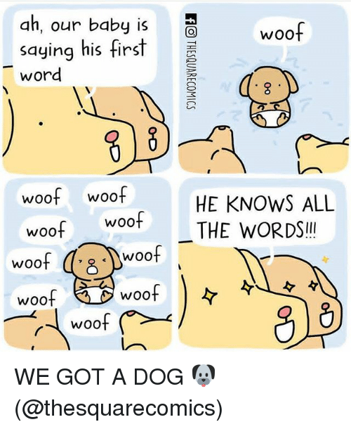 His First Words: dh, our babyi  saying his first  word  woof  woof woof  woof woof  HE KNOWS ALL  THE WORDSI!  woo  woof  woof  woof WE GOT A DOG 🐶 (@thesquarecomics)