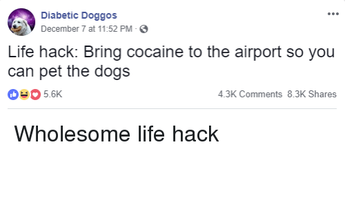 Diabetic: Diabetic Doggos  December 7 at 11:52 PM-  Life hack: Bring cocaine to the airport so you  can pet the dogs  035.6K  4.3K Comments 8.3K Shares Wholesome life hack