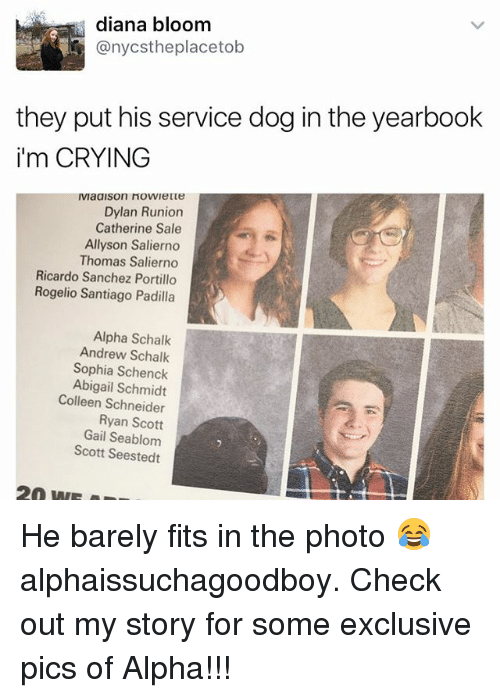 gail: diana bloom  anycstheplacetob  they put his service dog in the yearbook  i'm CRYING  Dylan Runion  Catherine Sale  Allyson Salierno  Thomas Salierno  Ricardo Sanchez Portillo  Rogelio Santiago Padilla  Alpha Schalk  Andrew Schalk  Sophia Schenck  Abigail Schmidt  Colleen Schneider  Ryan Scott  Gail Seablom  Scott Seestedt He barely fits in the photo 😂 alphaissuchagoodboy. Check out my story for some exclusive pics of Alpha!!!