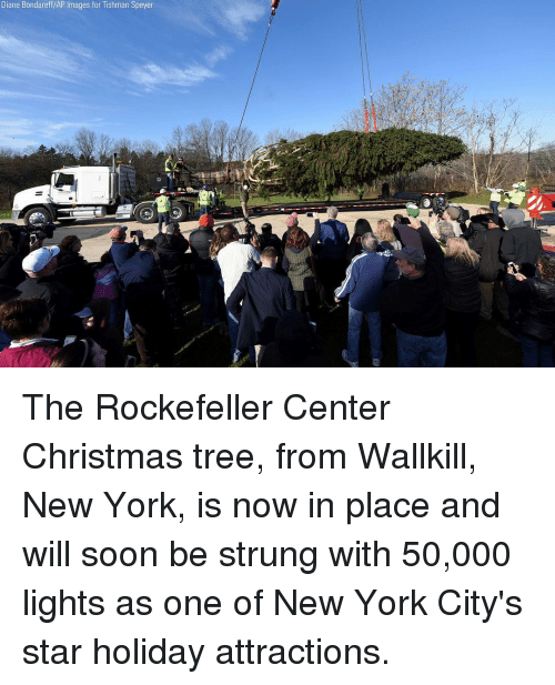 ap images: Diane Bondareff/AP Images for Tishman Speyer The Rockefeller Center Christmas tree, from Wallkill, New York, is now in place and will soon be strung with 50,000 lights as one of New York City's star holiday attractions.