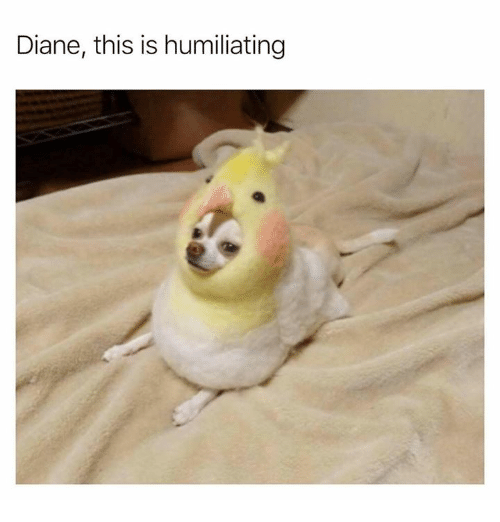 Dank, 🤖, and This: Diane, this is humiliating