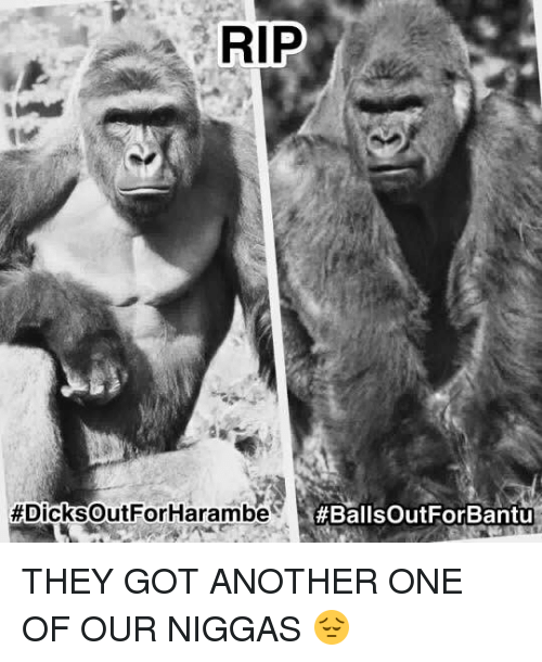 Another One, Another One, and Memes:  #DicksoutFor Harambe  THEY GOT ANOTHER ONE OF OUR NIGGAS 😔