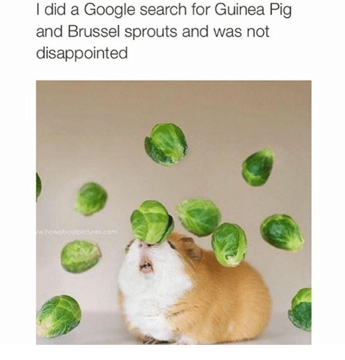brussels sprout: did a Google search for Guinea Pig  and Brussel sprouts and was not  disappointed