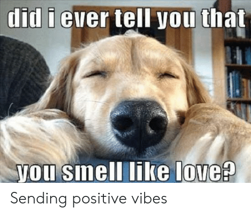 sending positive vibes: did i euer tell you that  you sinell like love? Sending positive vibes