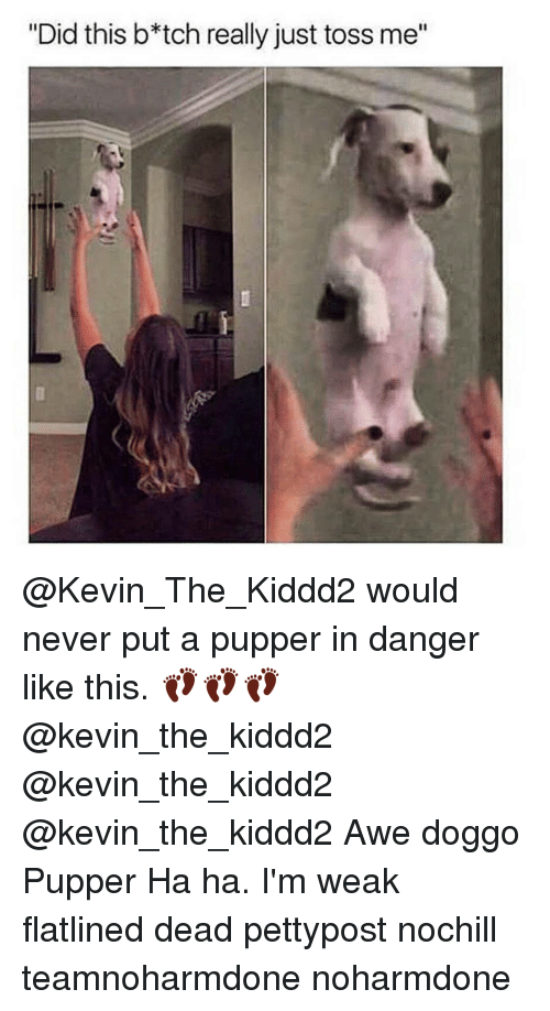 """awe: """"Did this b*tch really just toss me"""" @Kevin_The_Kiddd2 would never put a pupper in danger like this. 👣👣👣 @kevin_the_kiddd2 @kevin_the_kiddd2 @kevin_the_kiddd2 Awe doggo Pupper Ha ha. I'm weak flatlined dead pettypost nochill teamnoharmdone noharmdone"""