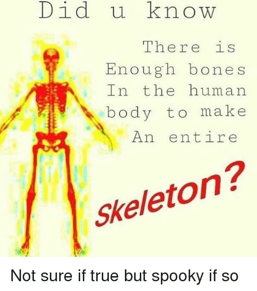 Bones, True, and Dank Memes: Did u know  The re iS  Enough bones  In the human  body to make  An entire  Skeleton? Not sure if true but spooky if so