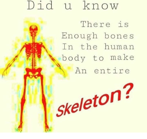Bones, Human, and Human Body: Did uknow  The re 1s  Enough bones  In the human  body to make  An entire  Skeleton?
