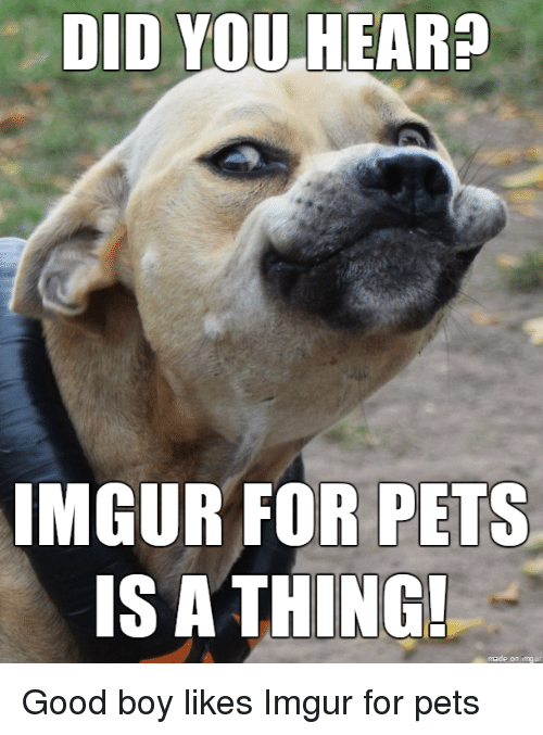 Pets, Good, and Imgur: DID YOU HEAR  IMGUR OR PETS  IS A THING!
