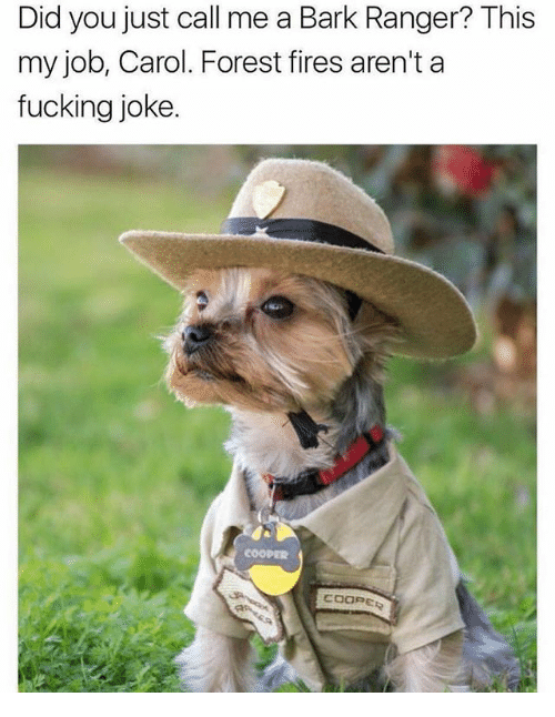 Fucking, Memes, and 🤖: Did you just call me a Bark Ranger? This  my job, Carol. Forest fires aren't a  fucking joke  COOPE