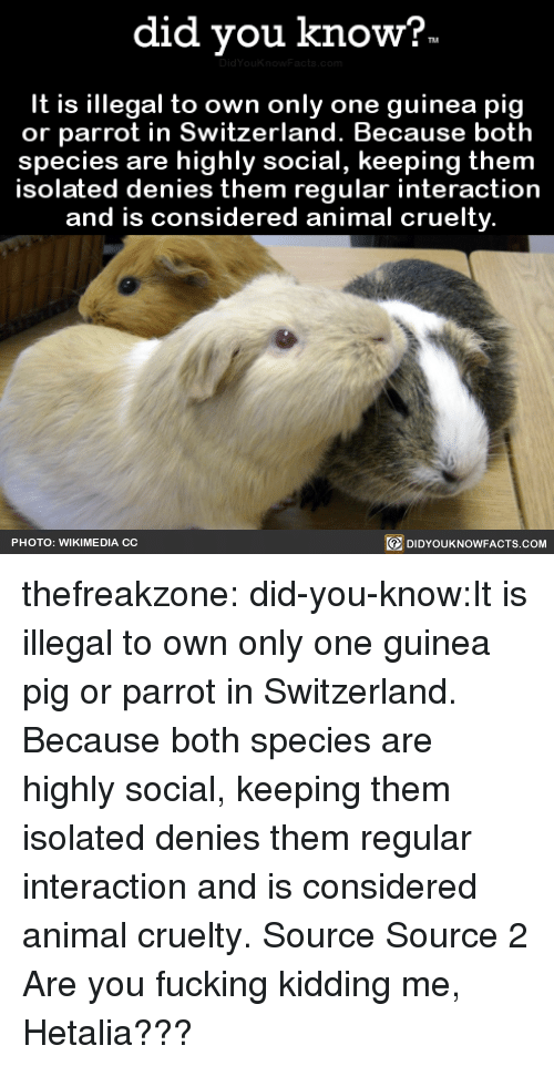 You Fucking Kidding Me: did you kno  w?  It is illegal to own only one guinea pig  or parrot in Switzerland. Because both  species are highly social, keeping them  solated denies them regular interaction  and is considered animal cruelty  回DIDYOUKNOWFACTS.COM  PHOTO: WIKIMEDIA CC thefreakzone:  did-you-know:It is illegal to own only one guinea pig  or parrot in Switzerland. Because both  species are highly social, keeping them  isolated denies them regular interaction  and is considered animal cruelty.    Source Source 2 Are you fucking kidding me, Hetalia???