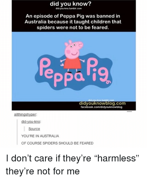 """Children, Facebook, and Memes: did you know?  did-you-kno.tumbir.com  An episode of Peppa Pig was banned in  Australia because it taught children that  spiders were not to be feared.  facebook.com/didyouknowblog  allthingshyper  did-you-kno:  Source  YOU'RE IN AUSTRALIA  OF COURSE SPIDERS SHOULD BE FEARED I don't care if they're """"harmless"""" they're not for me"""