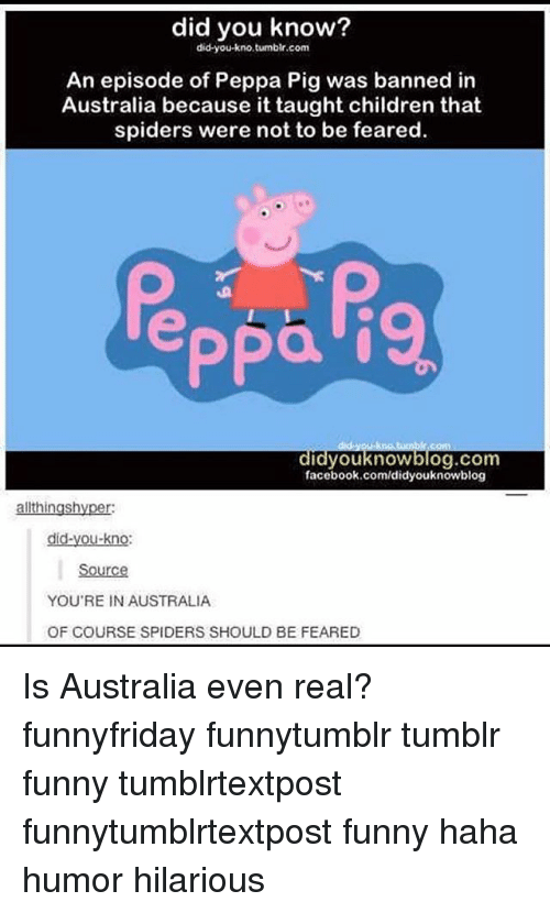 Pigly: did you know?  did you kno, tumblr.com  An episode of Peppa Pig was banned in  Australia because it taught children that  spiders were not to be feared.  Ppa  didyou know blog.com  facebook.com/didyouknowblog  ingsh  did-you-kno:  YOU'RE IN AUSTRALIA  OF COURSE SPIDERS SHOULD BE FEARED Is Australia even real? funnyfriday funnytumblr tumblr funny tumblrtextpost funnytumblrtextpost funny haha humor hilarious
