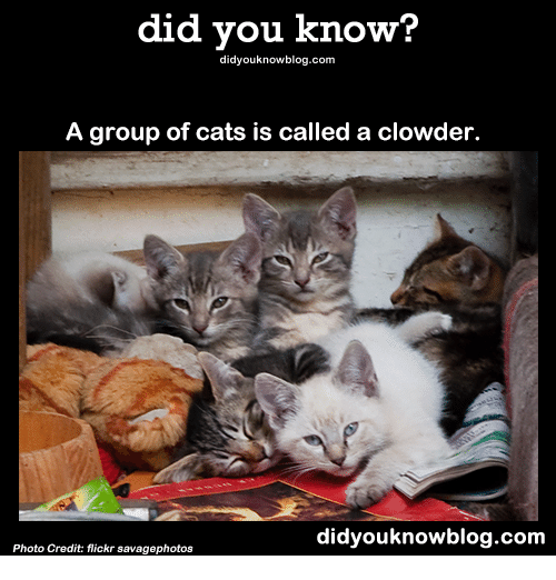 Did You Know? Did Youknowblogcom a Group of Cats Is Called ...