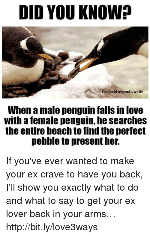 Cravings: DID YOU KNOW?  f b/david avocado wolfe  When a male penguin falls in love  With a female penguin, he searches  the entire beach to find the perfect  pebble to present her. If you've ever wanted to make your ex crave to have you back, I'll show you exactly what to do and what to say to get your ex lover back in your arms… http://bit.ly/love3ways