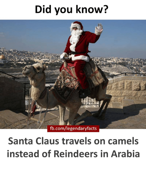 Memes, Santa Claus, and Travel: Did you know?  fb.com/legendaryfacts  Santa Claus travels on camels  instead of Reindeers in Arabia