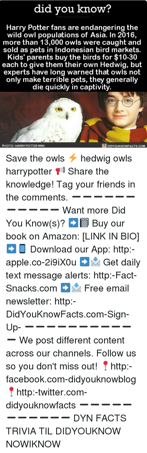 wildness: did you know?  Harry Potter fans are endangering the  wild owl populations of Asia. In 2016,  more than 13,000 owls were caught and  sold as pets in Indonesian bird markets.  Kids' parents buy the birds for $10-30  each to give them their own Hedwig, but  experts have long warned that owls not  only make terrible pets, they generally  die quickly in captivity.  PHOTO: HARRY POTTER WIKI  DIDYOUKNOWFACTS.COM Save the owls ⚡️ hedwig owls harrypotter 📢 Share the knowledge! Tag your friends in the comments. ➖➖➖➖➖➖➖➖➖➖➖ Want more Did You Know(s)? ➡📓 Buy our book on Amazon: [LINK IN BIO] ➡📱 Download our App: http:-apple.co-2i9iX0u ➡📩 Get daily text message alerts: http:-Fact-Snacks.com ➡📩 Free email newsletter: http:-DidYouKnowFacts.com-Sign-Up- ➖➖➖➖➖➖➖➖➖➖➖ We post different content across our channels. Follow us so you don't miss out! 📍http:-facebook.com-didyouknowblog 📍http:-twitter.com-didyouknowfacts ➖➖➖➖➖➖➖➖➖➖➖ DYN FACTS TRIVIA TIL DIDYOUKNOW NOWIKNOW