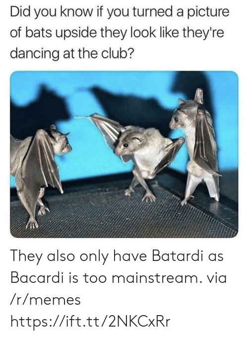 Too Mainstream: Did you know if you turned a picture  of bats upside they look like they're  dancing at the club? They also only have Batardi as Bacardi is too mainstream. via /r/memes https://ift.tt/2NKCxRr