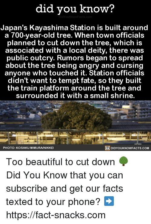 Dank, 🤖, and Local: did you know?  Japan's Kayashima Station is built around  a 700-year-old tree. When town officials  planned to cut down the tree, which is  associated with a local deity, there was  public outcry. Rumors began to spread  about the tree being angry and cursing  anyone who touched it. Station officials  didn't want to tempt fate, so they built  the train platform around the tree and  surrounded it with a small shrine.  PHOTO: KOSAKU MIMURANIKKEI  DIDYOUKNOWFACTS.COM Too beautiful to cut down 🌳  Did You Know that you can subscribe and get our facts texted to your phone? ➡ https://fact-snacks.com