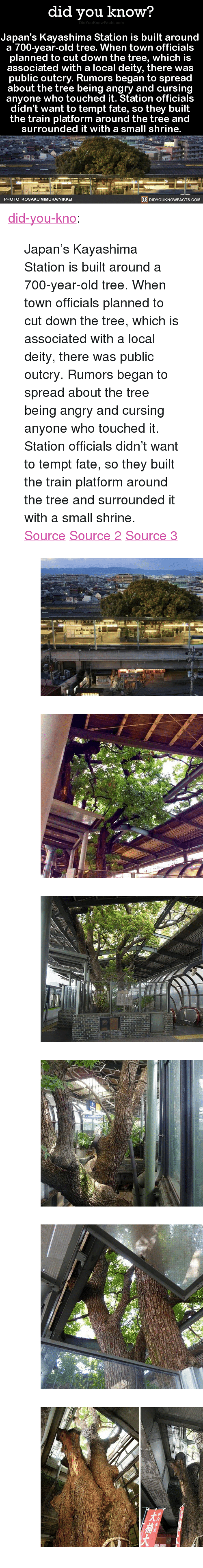"Deity: did you know?  Japan's Kayashima Station is built around  a 700-vear-old tree. When town officials  planned to cut down the tree, which is  associated with a local deity, there was  public outcry. Rumors began to spread  about the tree being angry and cursin  anyone who touched it. Station officials  didn't want to tempt fate, so they built  the train platform around the tree and  surrounded it with a small shrine.  PHOTO: KOSAKU MIMURA/NIKKE  DIDYOUKNOWFACTS.CoM <p><a href=""http://didyouknowblog.com/post/158719101556/japans-kayashima-station-is-built-around-a"" class=""tumblr_blog"">did-you-kno</a>:</p> <blockquote> <p>Japan's Kayashima Station is built around  a 700-year-old tree. When town officials  planned to cut down the tree, which is  associated with a local deity, there was  public outcry. Rumors began to spread  about the tree being angry and cursing  anyone who touched it. Station officials  didn't want to tempt fate, so they built  the train platform around the tree and  surrounded it with a small shrine.  <a href=""http://www.spoon-tamago.com/2017/01/21/kayashima-the-japanese-train-station-built-around-a-700-year-old-tree/"">Source</a> <a href=""http://mymodernmet.com/kayashima-station-camphor-tree/"">Source 2</a> <a href=""http://www.atlasobscura.com/places/kayashima-station"">Source 3</a></p> <figure class=""tmblr-full"" data-orig-height=""339"" data-orig-width=""540""><img src=""https://78.media.tumblr.com/6db5d29da101ddfaf26022f04de5b681/tumblr_inline_on74fjj7621uy8wg3_540.jpg"" data-orig-height=""339"" data-orig-width=""540""/></figure><figure class=""tmblr-full"" data-orig-height=""403"" data-orig-width=""540""><img src=""https://78.media.tumblr.com/add8874ad450eeefd38d59773a5c0daf/tumblr_inline_on74fjyMYv1uy8wg3_540.jpg"" data-orig-height=""403"" data-orig-width=""540""/></figure><figure class=""tmblr-full"" data-orig-height=""359"" data-orig-width=""540""><img src=""https://78.media.tumblr.com/6884871ae50eed2103c666942ea81536/tumblr_inline_on74fkVp341uy8wg3_540.jpg"" data-orig-height=""359"" data-orig-width=""540""/></figure><figure class=""tmblr-full"" data-orig-height=""360"" data-orig-width=""540""><img src=""https://78.media.tumblr.com/84109a84e6f3c7e208adb9314d02d7de/tumblr_inline_on74fl3g3T1uy8wg3_540.jpg"" data-orig-height=""360"" data-orig-width=""540""/></figure><figure class=""tmblr-full"" data-orig-height=""405"" data-orig-width=""540""><img src=""https://78.media.tumblr.com/bda0bdb89828a2c1f0f0b311be9af4a7/tumblr_inline_on74flgra11uy8wg3_540.jpg"" data-orig-height=""405"" data-orig-width=""540""/></figure><figure class=""tmblr-full"" data-orig-height=""344"" data-orig-width=""540""><img src=""https://78.media.tumblr.com/6dfa91addc768a5c8211dcb55d7f6a3e/tumblr_inline_on74fmKFrz1uy8wg3_540.jpg"" data-orig-height=""344"" data-orig-width=""540""/></figure></blockquote>"