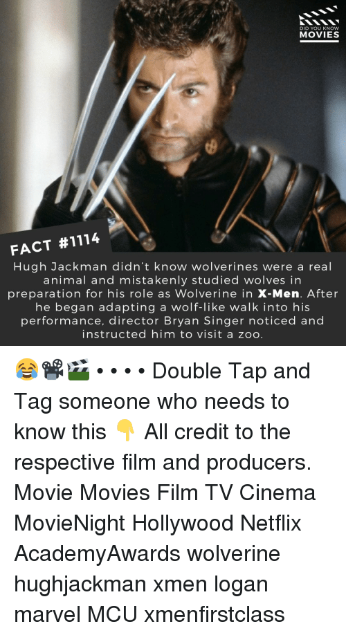 Hughjackman: DID YOU KNOW  MOVIES  FACT #1114  Hugh Jackman didn't know wolverines were a real  animal and mistakenly studied wolves in  preparation for his role as Wolverine in X-Men. After  he began adapting a wolf-like walk into his  performance, director Bryan Singer noticed and  instructed him to visit a zoo 😂📽️🎬 • • • • Double Tap and Tag someone who needs to know this 👇 All credit to the respective film and producers. Movie Movies Film TV Cinema MovieNight Hollywood Netflix AcademyAwards wolverine hughjackman xmen logan marvel MCU xmenfirstclass
