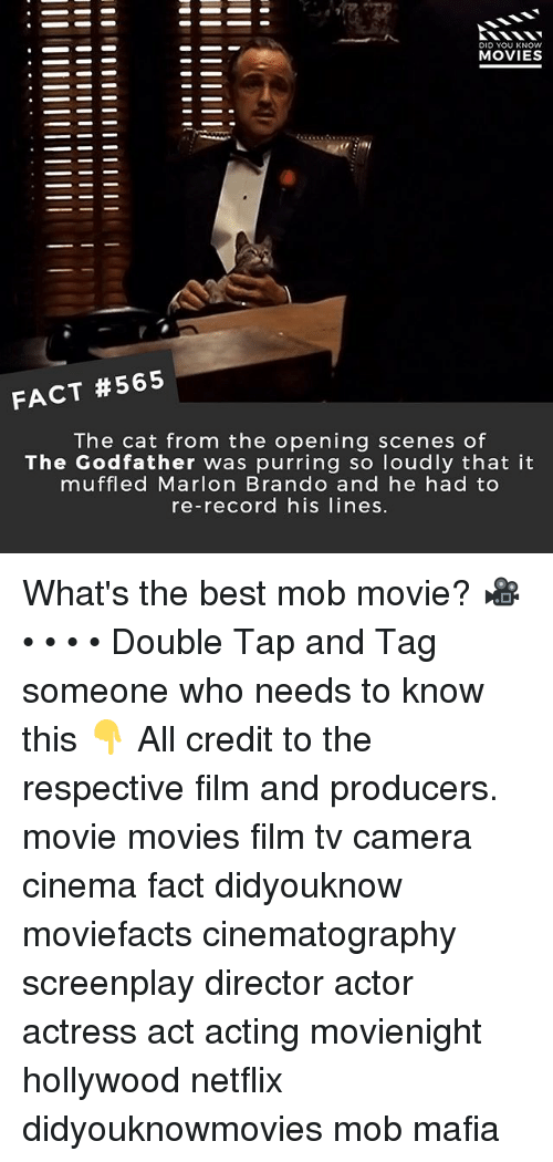 Memes, Movies, and Netflix: DID YOU KNOW  MOVIES  FACT #565  The cat from the opening scenes of  The Godfather was purring so loudly that it  muffled Marlon Brando and he had to  re-record his lines. What's the best mob movie? 🎥 • • • • Double Tap and Tag someone who needs to know this 👇 All credit to the respective film and producers. movie movies film tv camera cinema fact didyouknow moviefacts cinematography screenplay director actor actress act acting movienight hollywood netflix didyouknowmovies mob mafia
