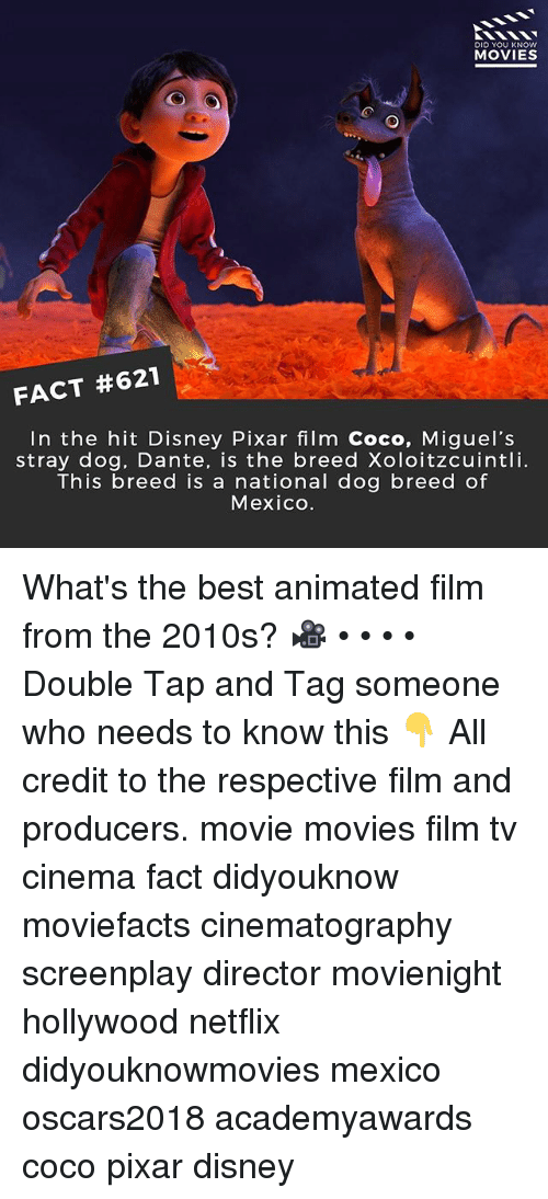 Miguels: DID YOU KNOW  MOVIES  FACT #621  In the hit Disney Pixar film Coco, Miguel's  stray dog, Dante, is the breed Xoloitzcuintli.  This breed is a national dog breed of  Mexico. What's the best animated film from the 2010s? 🎥 • • • • Double Tap and Tag someone who needs to know this 👇 All credit to the respective film and producers. movie movies film tv cinema fact didyouknow moviefacts cinematography screenplay director movienight hollywood netflix didyouknowmovies mexico oscars2018 academyawards coco pixar disney