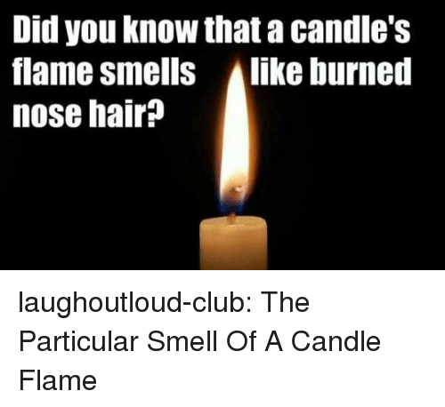 alike: Did you know that a candle's  flame smells Alike burned  nose hair? laughoutloud-club:  The Particular Smell Of A Candle Flame