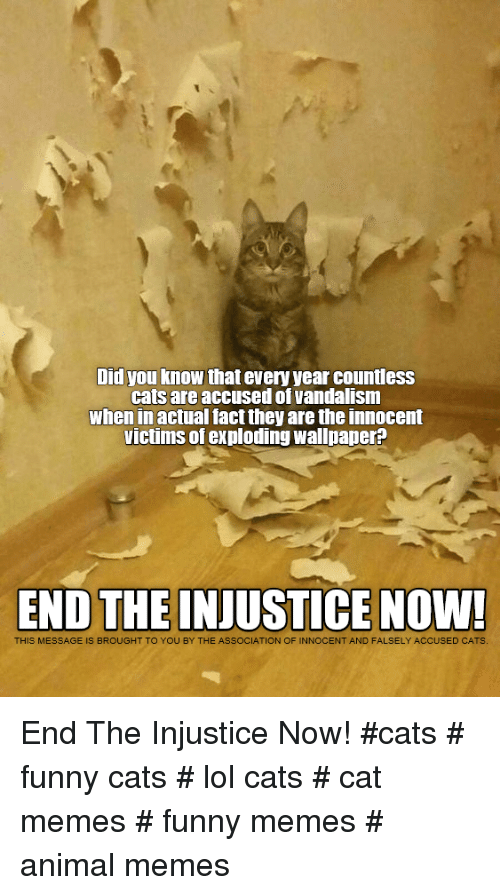 vandalism: Did you know that every year countless  cats are accused of vandalism  when in actual fact they are the innocent  victims of exploding wallpaper?  END THE INJUSTICE NOW!  THIS MESSAGE IS BROUGHT TO YOU BY THE ASSOCIATION OF INNOCENT AND FALSELY ACCUSED CATS End The Injustice Now!  #cats # funny cats # lol cats # cat memes # funny memes # animal memes