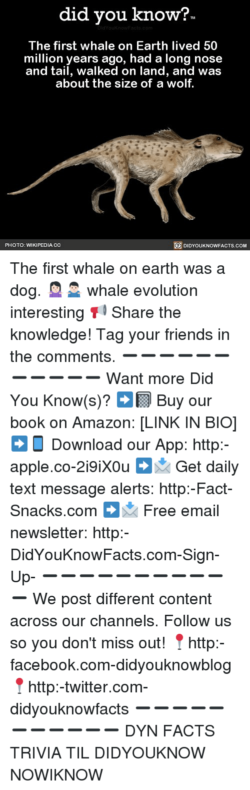 Amazon, Apple, and Facebook: did you know?  The first whale on Earth lived 50  million years ago, had a long nose  and tail, walked on land, and was  about the size of a wolf.  PHOTO: WIKIPEDIA CC  DIDYOUKNOWFACTS.COM The first whale on earth was a dog. 🤷🏻‍♀️🤷🏻‍♂️ whale evolution interesting 📢 Share the knowledge! Tag your friends in the comments. ➖➖➖➖➖➖➖➖➖➖➖ Want more Did You Know(s)? ➡📓 Buy our book on Amazon: [LINK IN BIO] ➡📱 Download our App: http:-apple.co-2i9iX0u ➡📩 Get daily text message alerts: http:-Fact-Snacks.com ➡📩 Free email newsletter: http:-DidYouKnowFacts.com-Sign-Up- ➖➖➖➖➖➖➖➖➖➖➖ We post different content across our channels. Follow us so you don't miss out! 📍http:-facebook.com-didyouknowblog 📍http:-twitter.com-didyouknowfacts ➖➖➖➖➖➖➖➖➖➖➖ DYN FACTS TRIVIA TIL DIDYOUKNOW NOWIKNOW