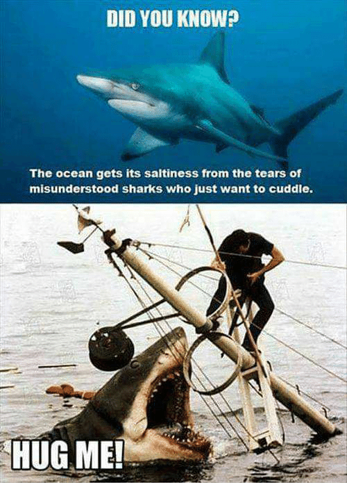 Memes, Ocean, and Sharks: DID YOU KNOW?  The ocean gets its saltiness from the tears of  misunderstood sharks who just want to cuddle.  HUG ME!