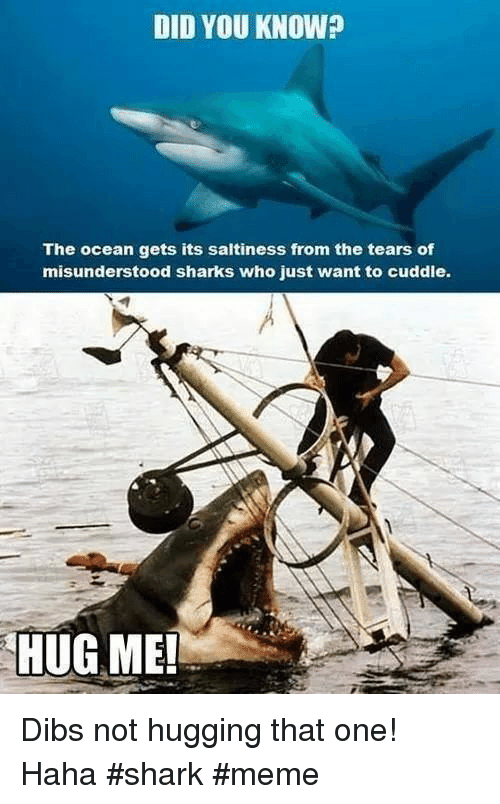 shark meme: DID YOU KNOW?  The ocean gets its saltiness from the tears of  misunderstood sharks who just want to cuddie.  HUG ME! Dibs not hugging that one! Haha #shark #meme