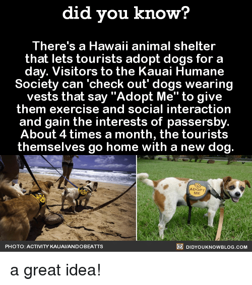 Kauai Humane Society Dog For A Day