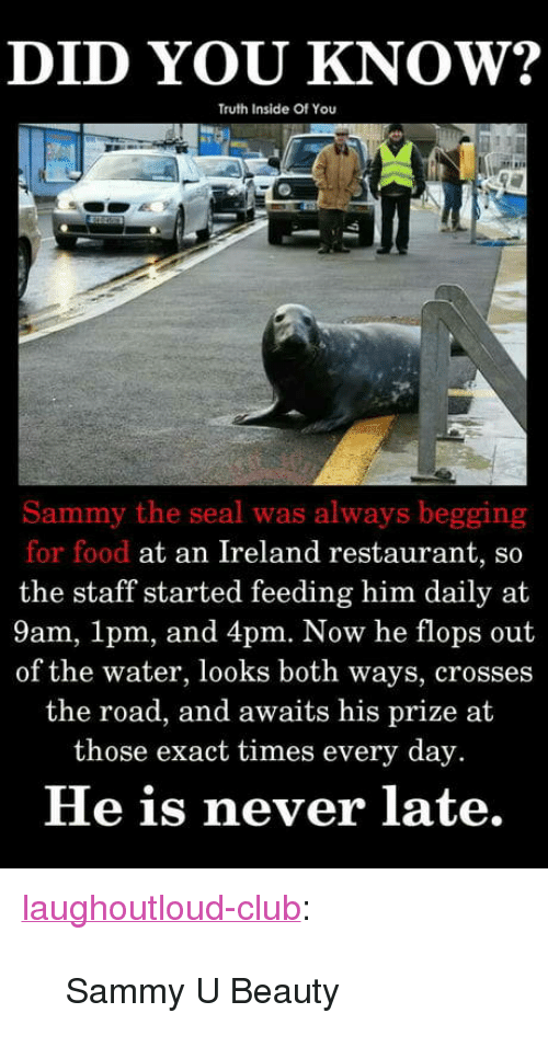 """Never Late: DID YOU KNOW?  Truth Inside Of You  Sammy the seal was always begging  for food at an Ireland restaurant, so  the staff started feeding him daily at  9am, 1pm, and 4pm. Now he flops out  of the water, looks both ways, crosses  the road, and awaits his prize at  those exact times every day.  He is never late. <p><a href=""""http://laughoutloud-club.tumblr.com/post/172117413825/sammy-u-beauty"""" class=""""tumblr_blog"""">laughoutloud-club</a>:</p>  <blockquote><p>Sammy U Beauty</p></blockquote>"""