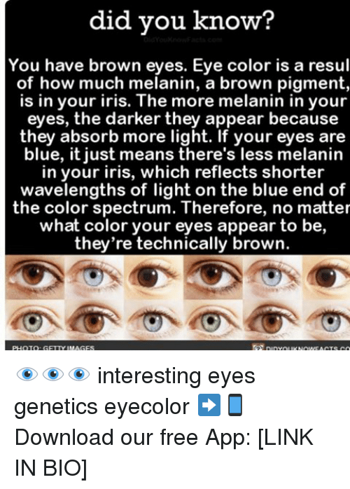 Memes, Browns, and Iris: did you know?  You have brown eyes. Eye color is a resul  of how much melanin, a brown pigment,  is in your iris. The more melanin in your  eyes, the darker they appear because  they absorb more light. If your eyes are  blue, it just means there's less melanin  in your iris, which reflects shorter  wavelengths of light on the blue end of  the color spectrum. Therefore, no matter  what color your eyes appear to be,  they're technically brown. 👁👁👁 interesting eyes genetics eyecolor ➡📱Download our free App: [LINK IN BIO]