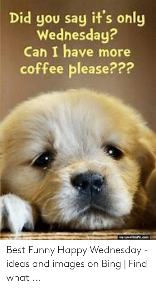🔥 25+ Best Memes About Wednesday Coffee Meme | Wednesday Coffee Memes #sweatpantsCoffeeQuotes