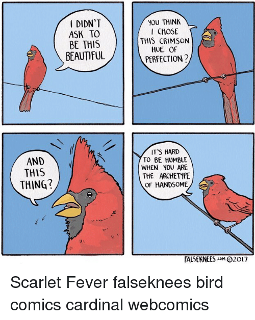 cardinal: DIDN'T  ASK TO  BE THIS  BEAUTIFUL  YOU THINK  CHOSE  THIS CRIMSON  HUE OF  PERFECTION?  IT'S HARD  TO BE HUMBLE  WHEN YOU ARE  THE ARCHETYPE  OF HANDSOME  AND  AND  THIS  THING?  TALSE KNEES .coM Θ2017 Scarlet Fever falseknees bird comics cardinal webcomics