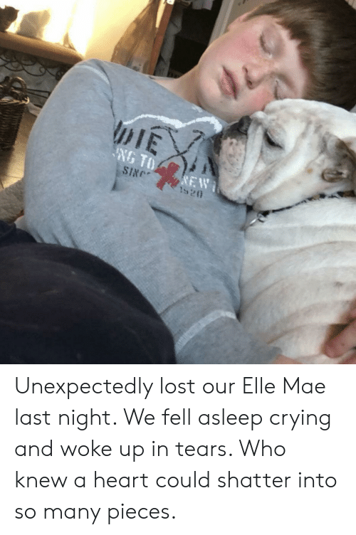 singe: DIE  NG TO  SINGE  NEW  1920 Unexpectedly lost our Elle Mae last night. We fell asleep crying and woke up in tears. Who knew a heart could shatter into so many pieces.