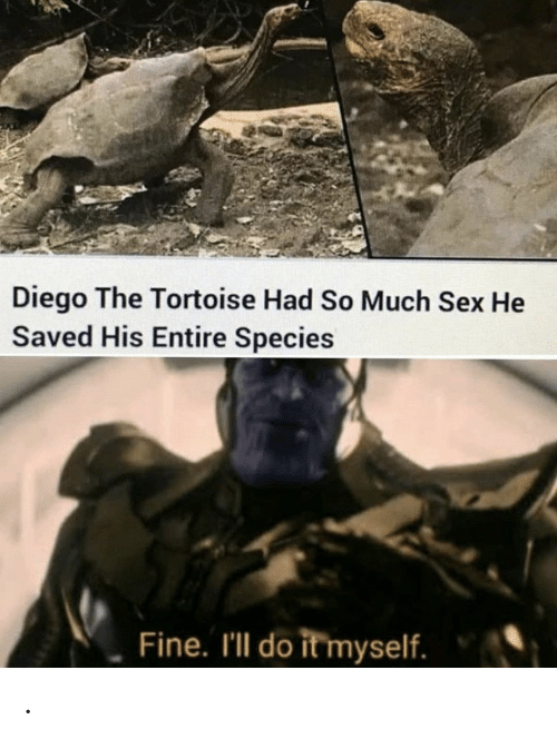species: Diego The Tortoise Had So Much Sex He  Saved His Entire Species  Fine. I'll do it myself. .