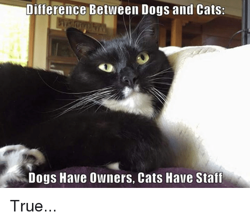 cat dog: Difference Between Dogs and Cats:  Dogs Have Owners, Cats Have Staff True...