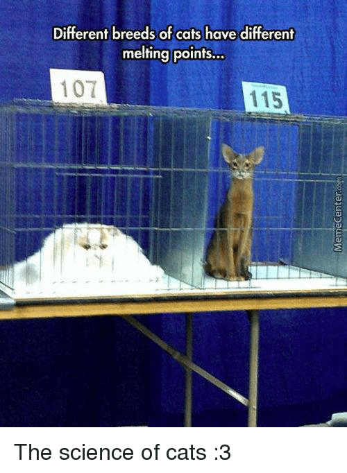 melting point: Different breeds of cats have different  melting points...  107  115 The science of cats :3