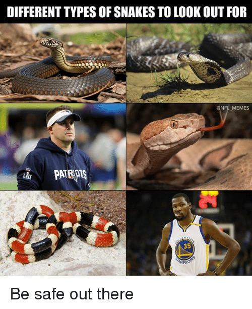 Memes, Nfl, and Snakes: DIFFERENT TYPES OF SNAKES TO LOOK OUT FOR  @NFL MEMES  35 Be safe out there