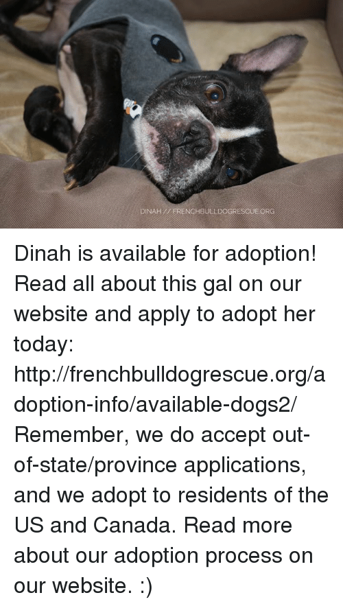 us-and-canada: DINAH ERENCHBULLDOGRESCUE ORG Dinah is available for adoption! Read all about this gal on our website <location, likes, dislikes> and apply to adopt her today: http://frenchbulldogrescue.org/adoption-info/available-dogs2/  Remember, we do accept out-of-state/province applications, and we adopt to residents of the US and Canada. Read more about our adoption process on our website. :)