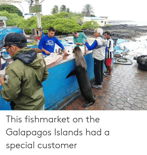 Oakey: dineter  te dtcie ersnetr  Es  heor feed  safe distace of2 neters  Thiy  La pe d  The wie  Ococo  OAKEY  THE  NORTH  FACE  RMG-03-087-10  CAMNIGOS  Jopp This fishmarket on the Galapagos Islands had a special customer