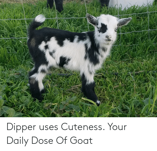 dipper: Dipper uses Cuteness. Your Daily Dose Of Goat