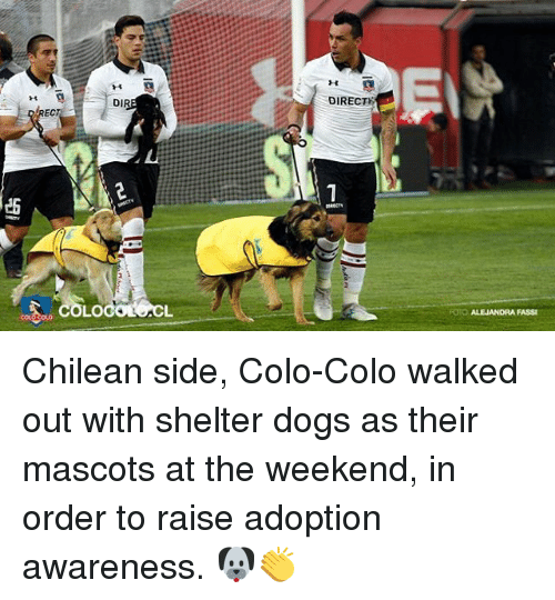 Chilean: DIRECT  14  DIR  EC  1  ES  RECTY  FOTO ALEJANDRA FASSI Chilean side, Colo-Colo walked out with shelter dogs as their mascots at the weekend, in order to raise adoption awareness. 🐶👏